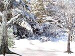 R11 - Winter Time - Back 020.jpg