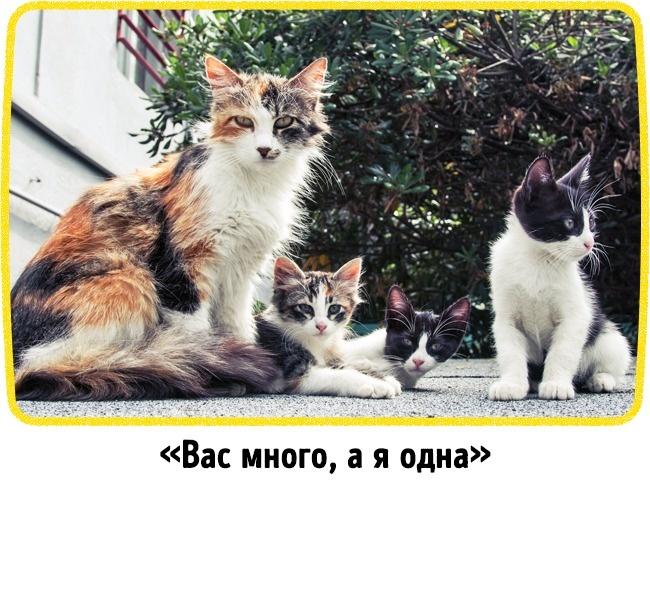 © Pexels.com  © Pexels.com   7.