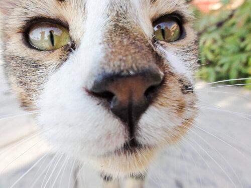 кошка, котэ, египет