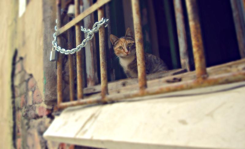 кот за решеткой, кошка за решеткой