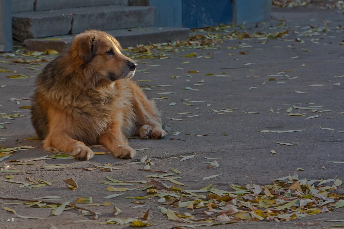 Замоскворечный пес