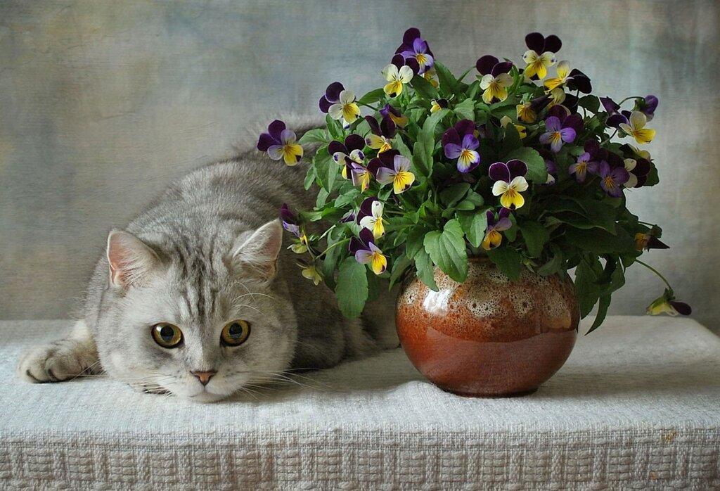 портрет задумчивого кота