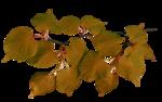 Осенний букет