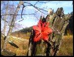 преКрасная осень