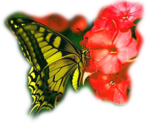 бабочк-Крылья-ангела-(2).png