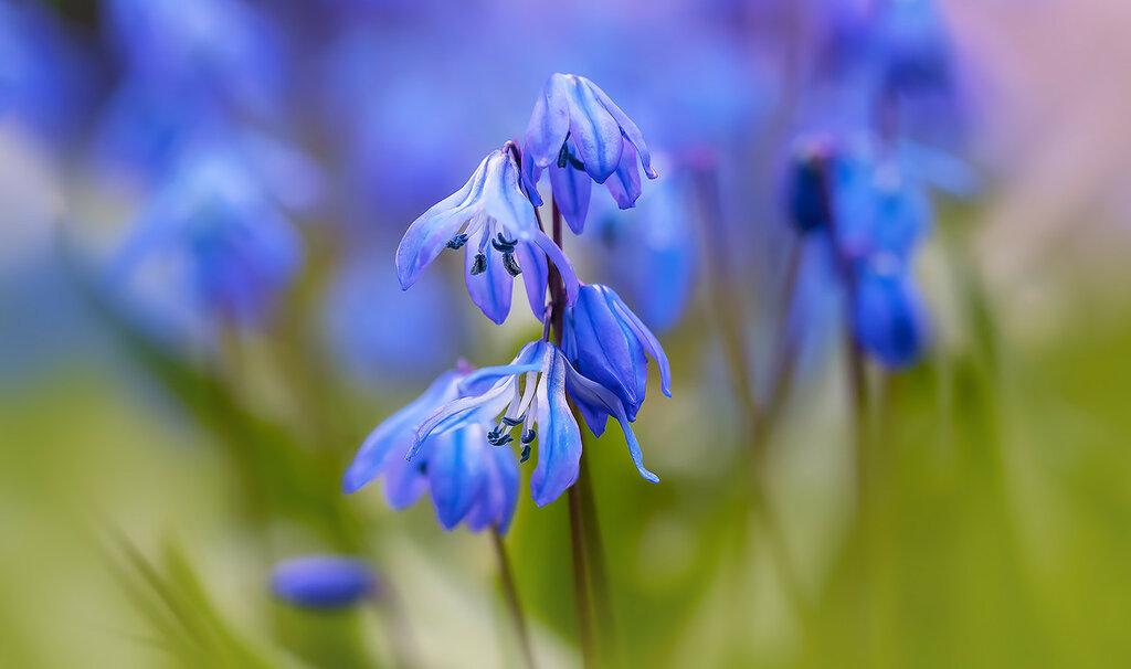 голубое апрельское