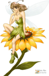 WS{}Apsylus_FairySunflower300807.png