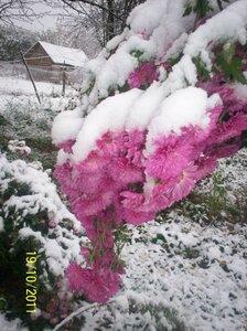 Первый снег в этом году.