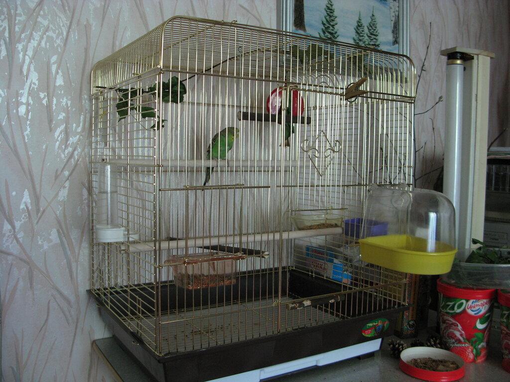 Можно ли сажать двух попугаев в одну клетку 95