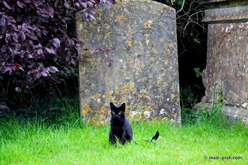 англия, аббатство лакок, черный кот, кладбище