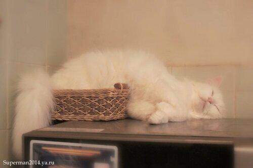 Спим-с...