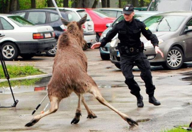 О суровой полиции