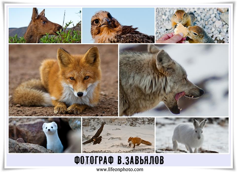 Фотограф-анималист В.Завьялов