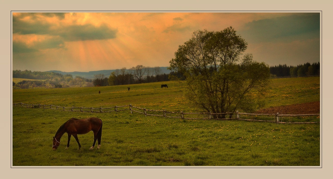 на лугу пасутся кони