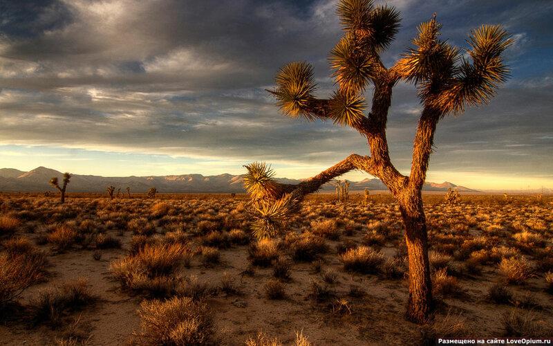 Как сделать лес в пустыне