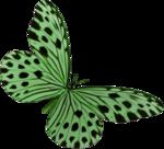 Lacarolita_My Fantasy Butterfly2.png