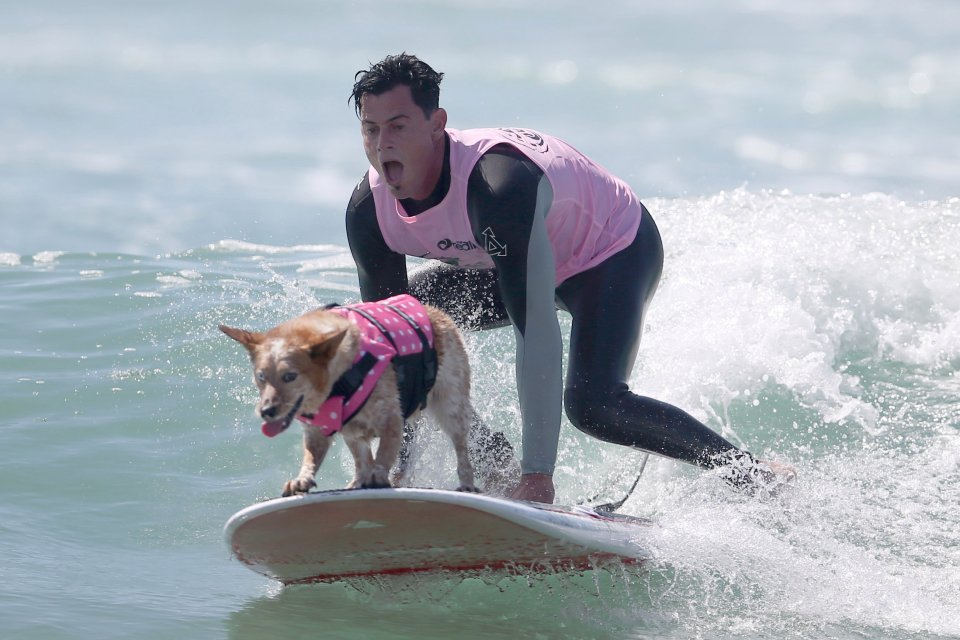 A man surfs with his dog during the Surf City Surf Dog competition in Huntington Beach