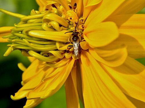 Искатель цветочных кладов