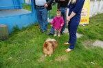 Выставка собак 2017 в Днепропетровске (8).JPG