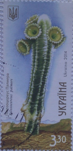 2014 кактус пилозоцереус палмера 3.30