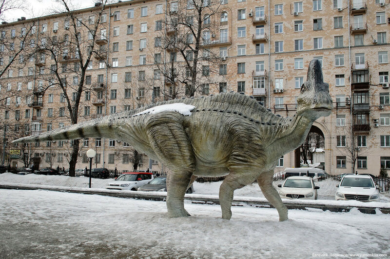 Зима. Дарвиновский музей. 15.02.17.01...jpg