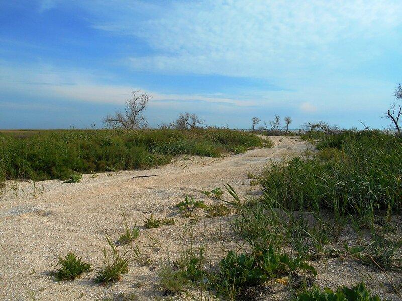Песчаная дорога в ... DSCN5822.JPG