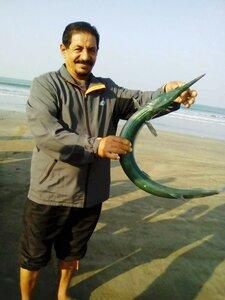 Вот такая рыба здесь ловится. Индия. январь 2017. Фотографии В. Лана.jpg
