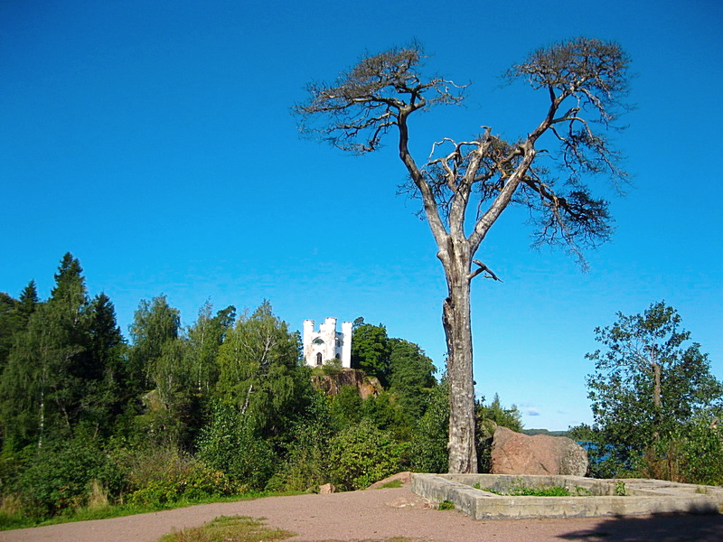 Сухое дерево, и вид его унылый