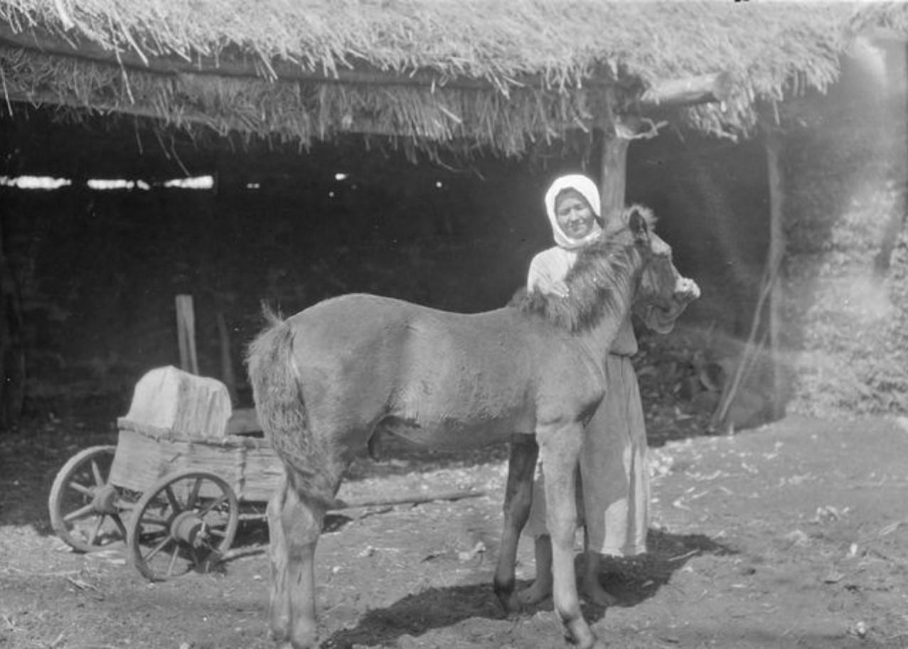 Пронькино. Женщина и жеребенок возле сарая