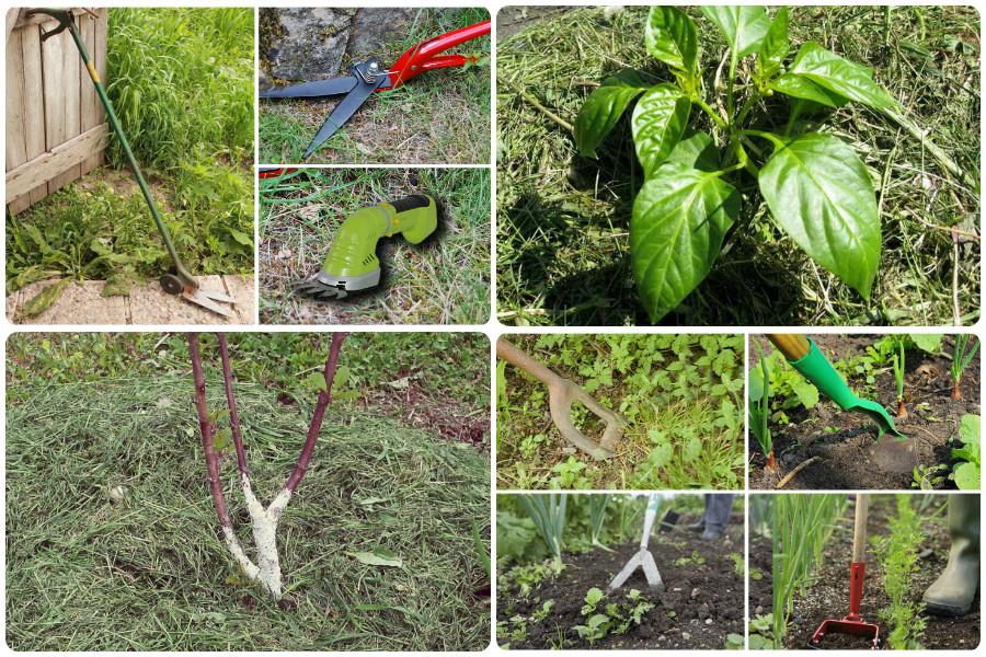 Как избавиться от сорняков: самый правильный способ