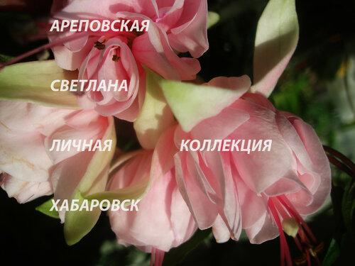 НОВИНКИ ФУКСИЙ. - Страница 5 0_151024_11da76cb_L