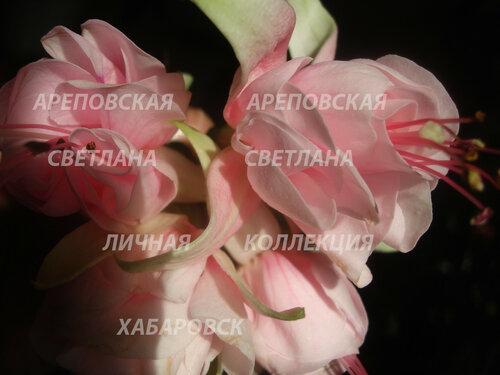 НОВИНКИ ФУКСИЙ. - Страница 5 0_151026_ee4b86b6_L