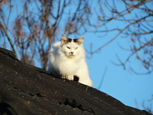 Мартовские кошки