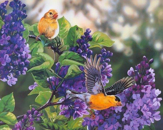 птицы Janene Grende