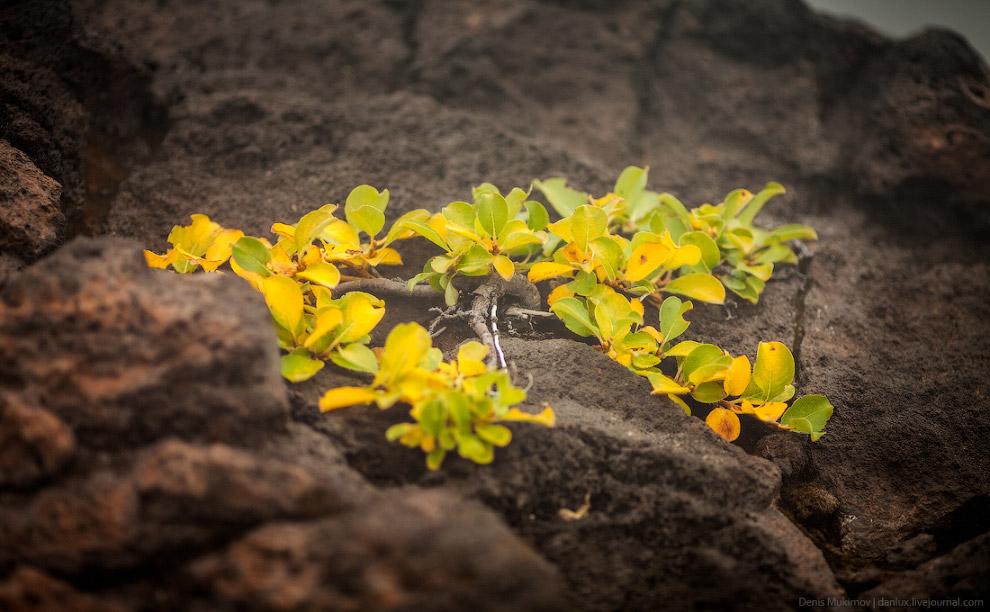 10. Подъем на вулкан достаточно несложный и под силу любому здоровому человеку.
