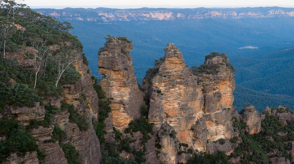 Склоны Голубых гор покрыты эвкалиптами, которых в здешних краях насчитывают порядка 90 видов. В