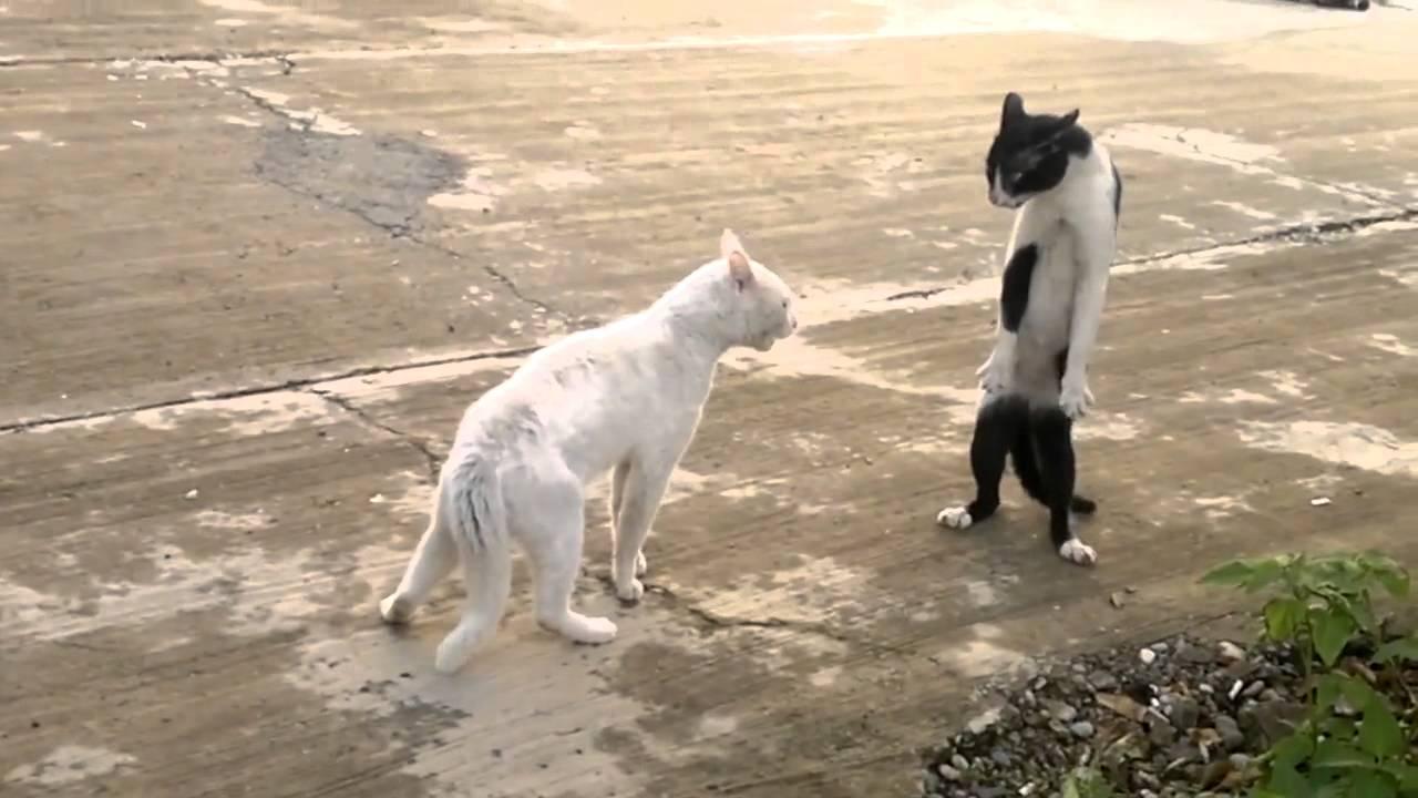 Мониторинг положения кота — стоит ли он…