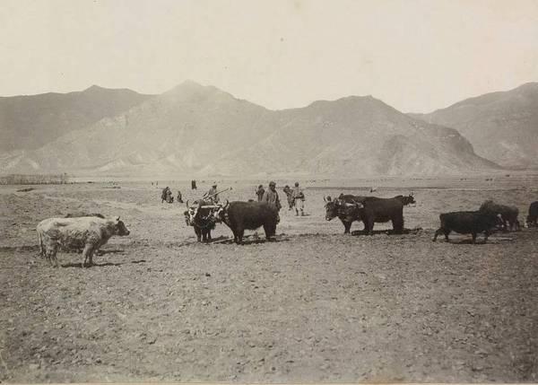 В самом конце 1900 года Норзунов в третий раз отправился в Тибет – на этот раз вместе с Доржиевым и
