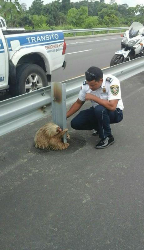 Полицейский спас испуганного ленивца