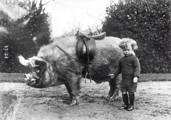 В 1930-м пони были для девочек и слабаков. А все настоящие мужчины катались исключительно на кабанах