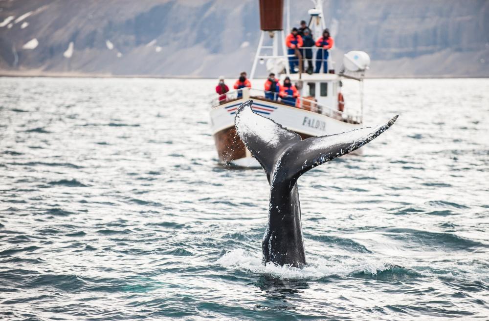 © Denis Kichatof/Shutterstock  Официальные символы Исландии— бык, великан, грифон исамый нас