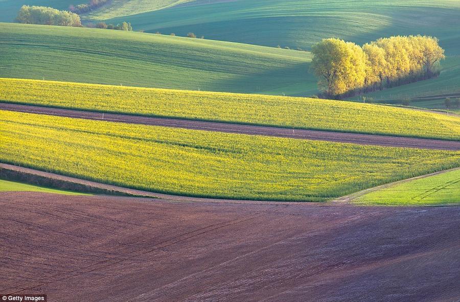 7. Моравия, Чехия. Поля Моравии пользуются огромной популярностью у фотографов, но практически не ра