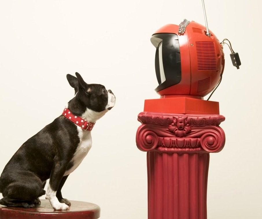 Ученые узнали, что вдействительности видят собаки втелевизоре