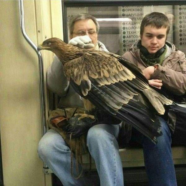 орел в метро