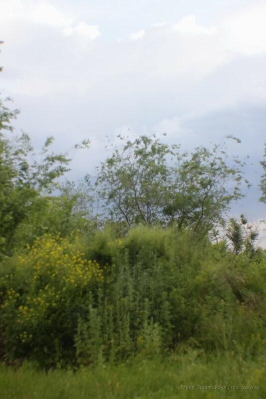 Прогулка, Энгельс, 15 июня 2017 года