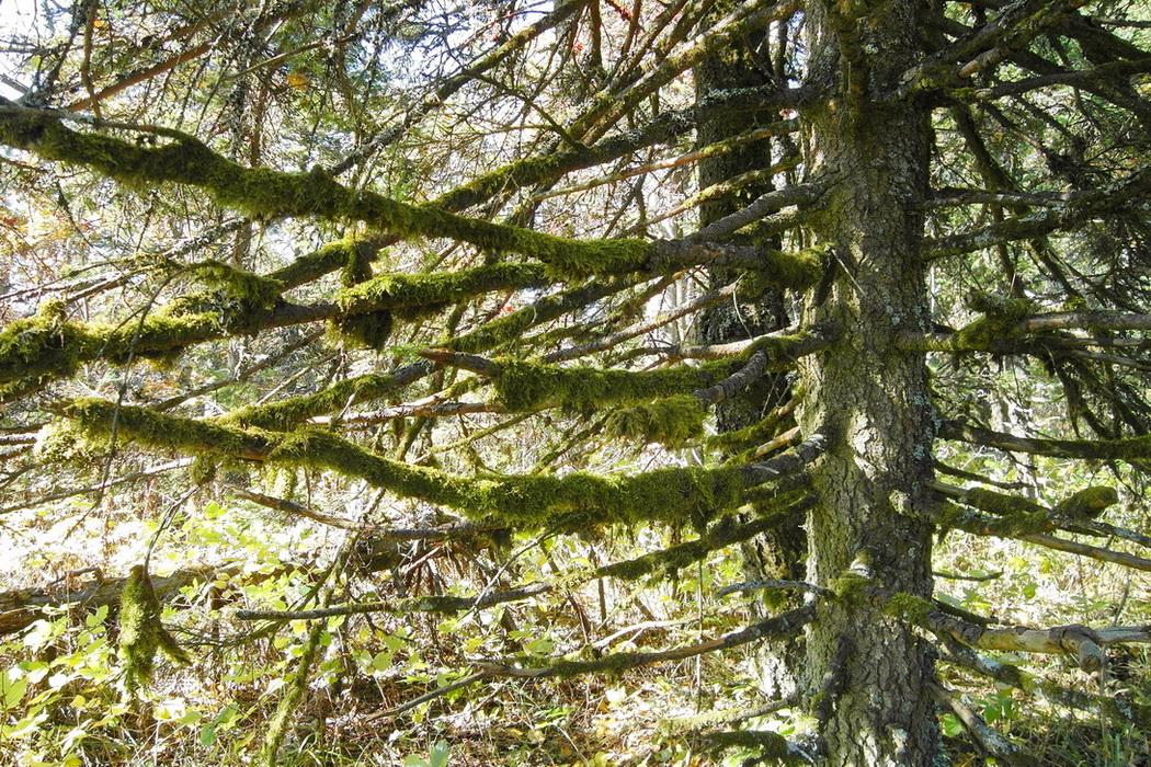 В дремучем лесу. Камера Samsung WB2000