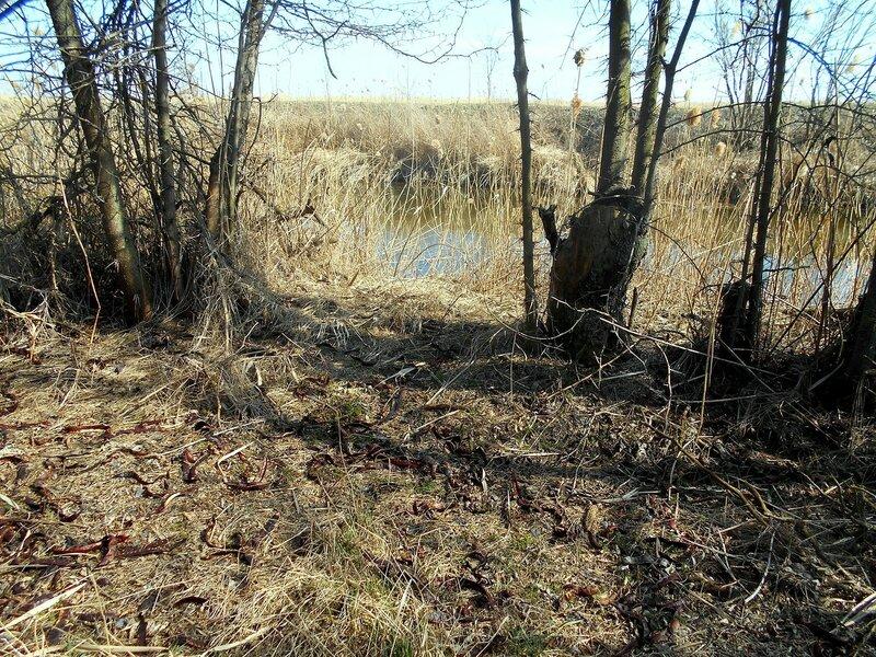 В марте, лесок и вода ... DSCN1340.JPG