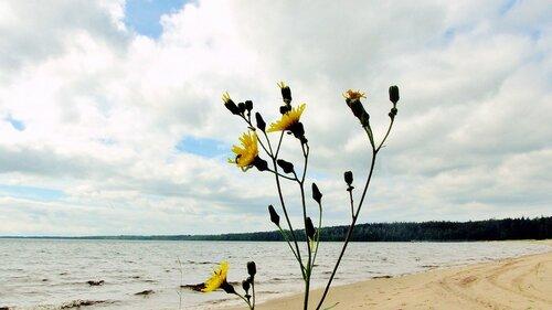 Цветы на берегу озера