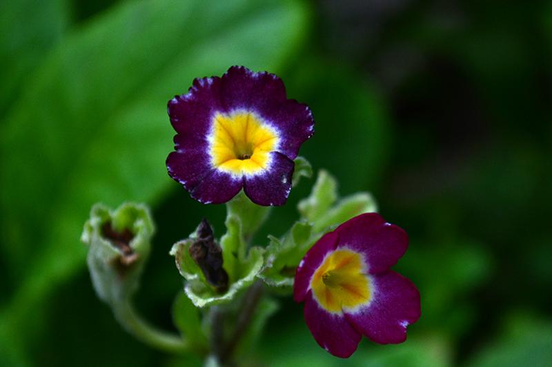 цветы дождливый день 6.jpg