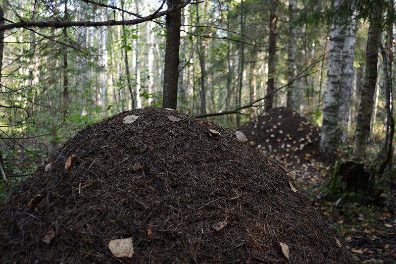 дома для муравьёв.jpg
